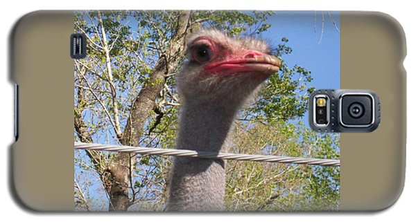 Ostrich Male Close Up Galaxy S5 Case by Belinda Lee
