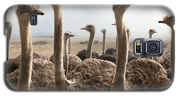 Ostrich Heads Galaxy S5 Case