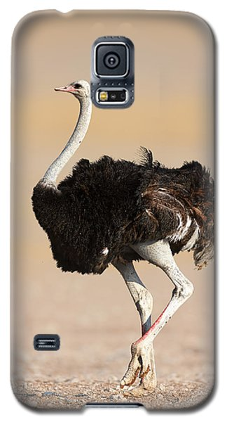 Ostrich Galaxy S5 Case by Johan Swanepoel