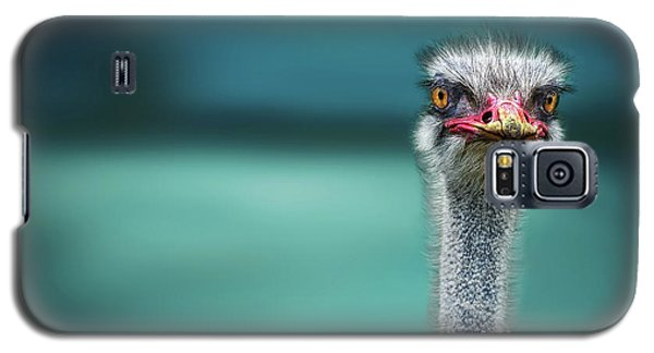 Ostrich Protecting Two Poor Chicken From The Wind Galaxy S5 Case