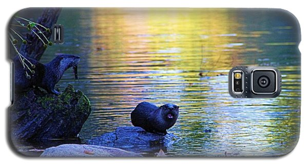 Otter Family Galaxy S5 Case by Dan Sproul