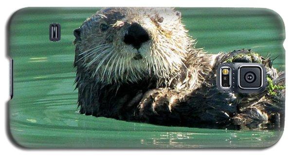 otter in Cordova Harbor Galaxy S5 Case