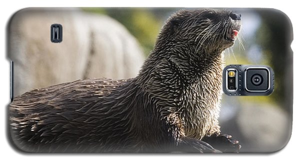 Otter Galaxy S5 Case - Otter Sun Bathing by Michael Ver Sprill