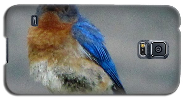 Galaxy S5 Case featuring the photograph Our Own Mad Bluebird by Betty Pieper