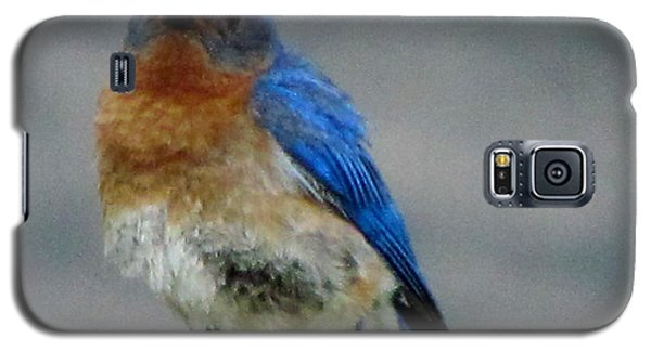 Our Own Mad Bluebird Galaxy S5 Case