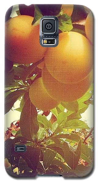 Orange Galaxy S5 Case - Our Plum Tree Is Loaded This Year...any by Blenda Studio