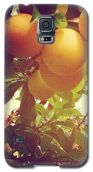 Our Plum Tree Is Loaded This Year...any Galaxy S5 Case by Blenda Studio