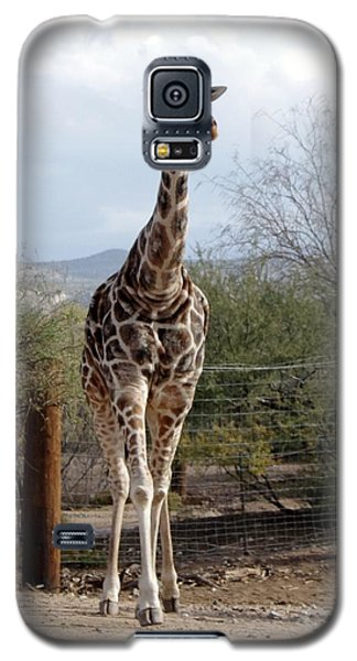 Out Of Africa  Giraffe 1 Galaxy S5 Case