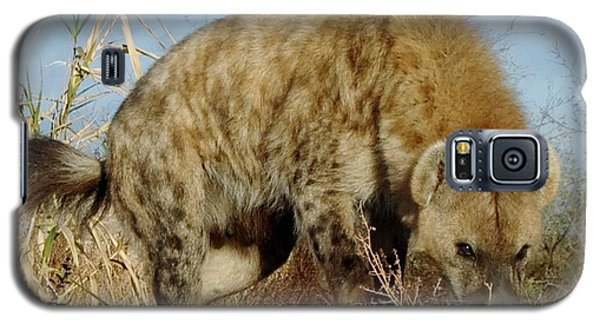 Out Of Africa Hyena 1 Galaxy S5 Case
