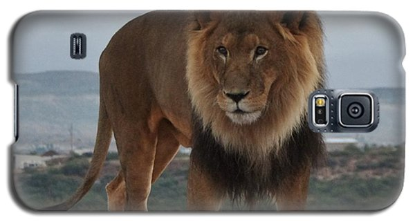 Out Of Africa Lion 3 Galaxy S5 Case
