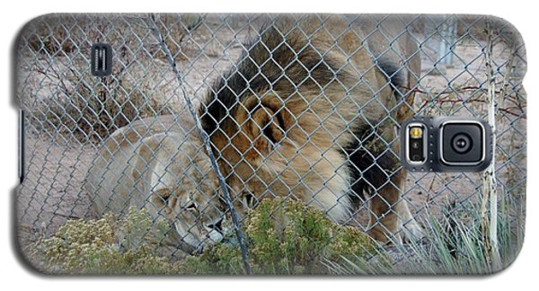 Out Of Africa Lions 4 Galaxy S5 Case