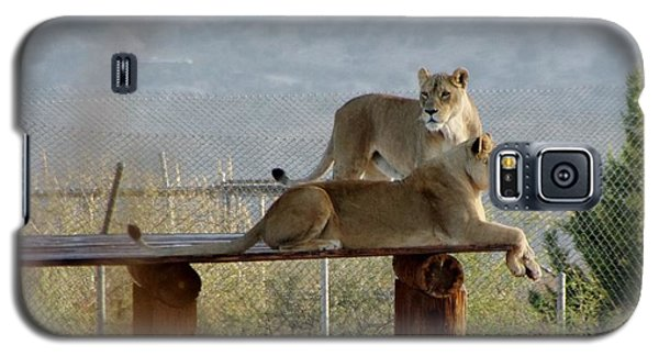 Out Of Africa Lions Galaxy S5 Case