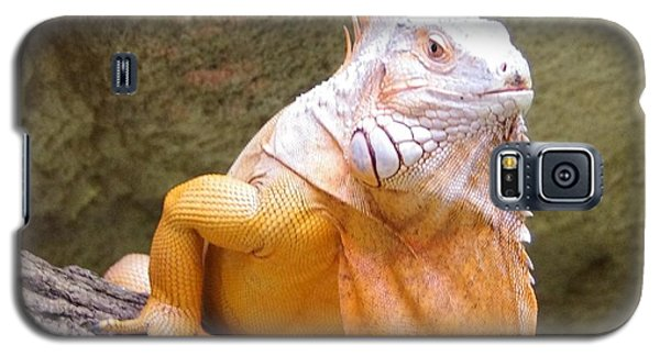 Out Of Africa Orange Lizard 1 Galaxy S5 Case