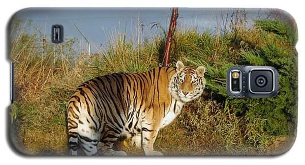 Out Of Africa  Tiger 1 Galaxy S5 Case