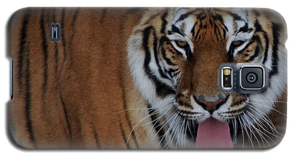 Out Of Africa  Tiger 2 Galaxy S5 Case