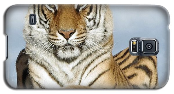 Out Of Africa Tiger 3 Galaxy S5 Case