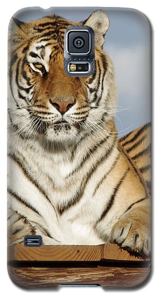 Out Of Africa Tiger 4 Galaxy S5 Case