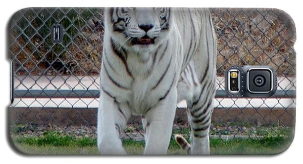 Out Of Africa White Tiger Galaxy S5 Case