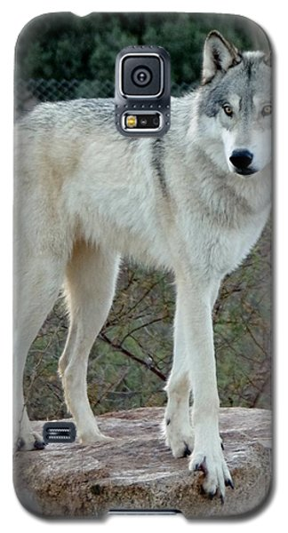 Out Of Africa Wolf  Galaxy S5 Case
