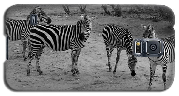 Out Of Africa  Zebras Galaxy S5 Case