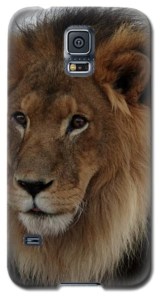 Out Ofafrica  Lion 4 Galaxy S5 Case
