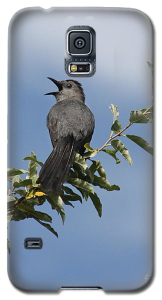 Galaxy S5 Case featuring the photograph Out On A Limb by Anita Oakley