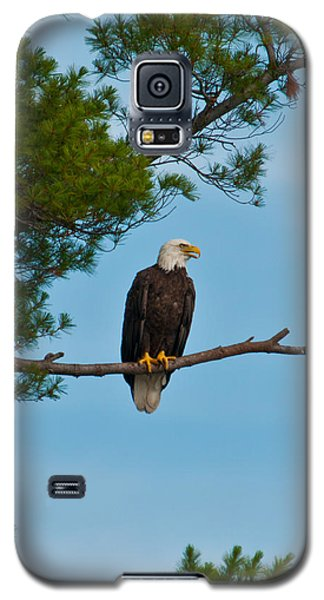 Galaxy S5 Case featuring the photograph Out On A Limb by Brenda Jacobs