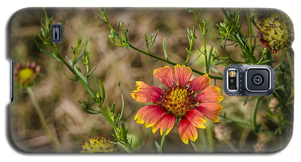 Outer Banks Wildflower Galaxy S5 Case by Bradley Clay