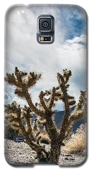 Owens Valley Cholla Galaxy S5 Case