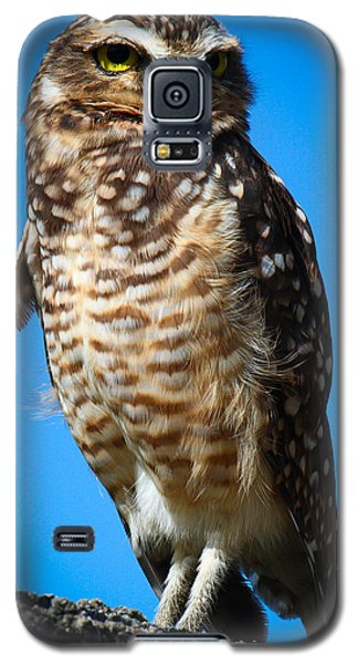 Owl 2  Galaxy S5 Case