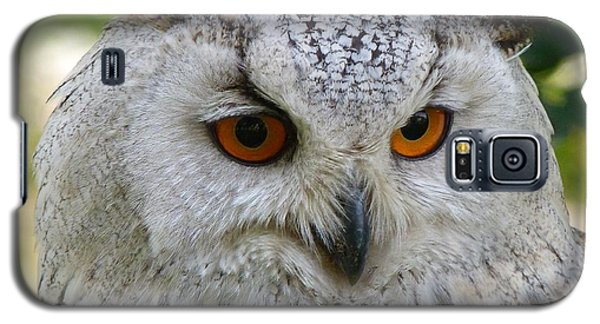 Galaxy S5 Case featuring the photograph Owl Bird Animal Eagle Owl by Paul Fearn