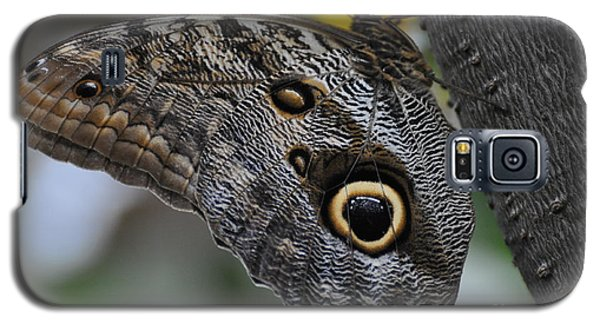 Galaxy S5 Case featuring the photograph Owl Butterfly by Bianca Nadeau