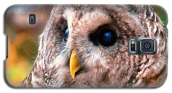 Owl Gaze Galaxy S5 Case