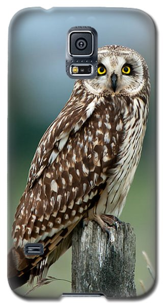 Owl See You Galaxy S5 Case by Torbjorn Swenelius