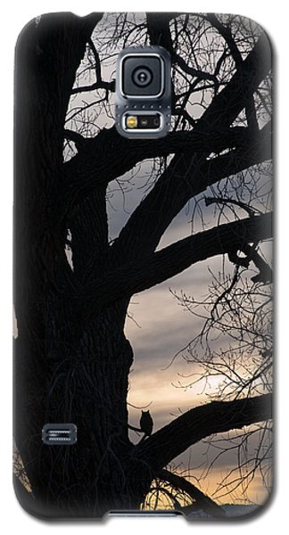 Owls Roost Galaxy S5 Case