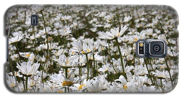 Ox Eye Daisies Galaxy S5 Case