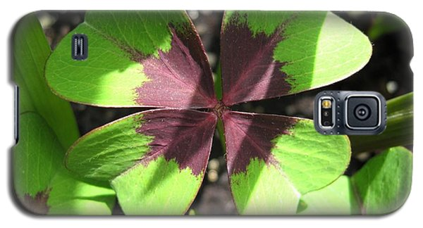 Oxalis Deppei Named Iron Cross Galaxy S5 Case
