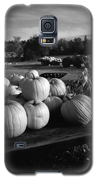 Oxford Pumpkins Bw Galaxy S5 Case