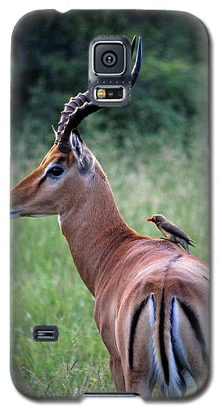 Galaxy S5 Case featuring the photograph Oxpecker And Impala by Dennis Cox WorldViews