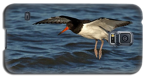 Galaxy S5 Case featuring the photograph Oystercatcher by Paul Scoullar
