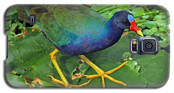Galaxy S5 Case featuring the photograph Purple Gallinule Feet by Larry Nieland