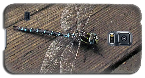 Pacific Forktail Galaxy S5 Case by I'ina Van Lawick