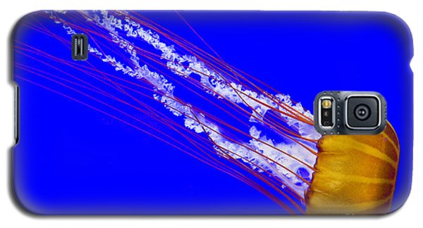 Galaxy S5 Case featuring the photograph Pacific Sea Nettle by Nick  Boren