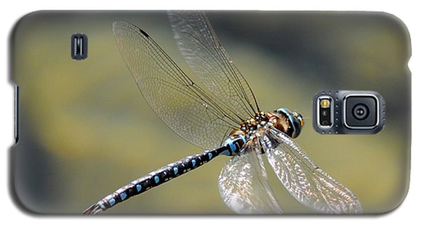Galaxy S5 Case featuring the photograph Paddletail Darner In Flight by Vivian Christopher