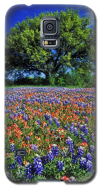Paintbrush And Bluebonnets - Fs000057 Galaxy S5 Case