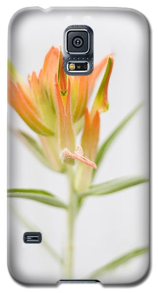 Paintbrush-high Key Galaxy S5 Case by Morris  McClung