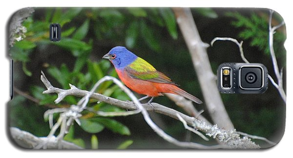 Painted Bunting Out On A Limb Galaxy S5 Case