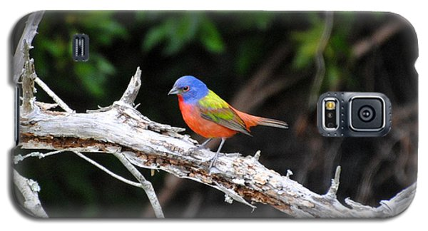 Painted Bunting Perched On Limb Galaxy S5 Case