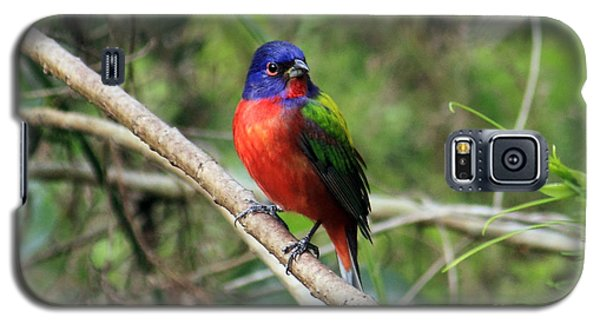 Galaxy S5 Case featuring the photograph Painted Bunting Photo by Meg Rousher