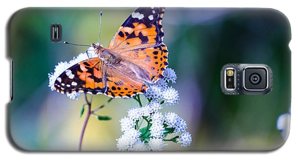 Painted Lady Butterfly 1 Galaxy S5 Case